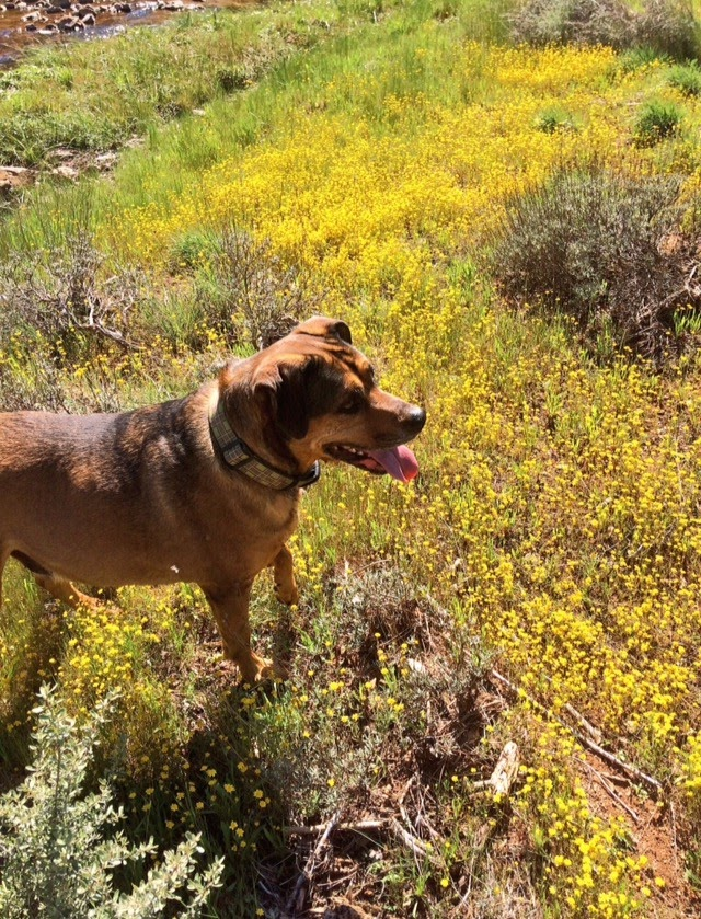 Red Hills Dog