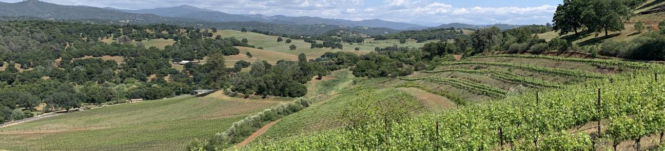 Gianelli Vineyards View